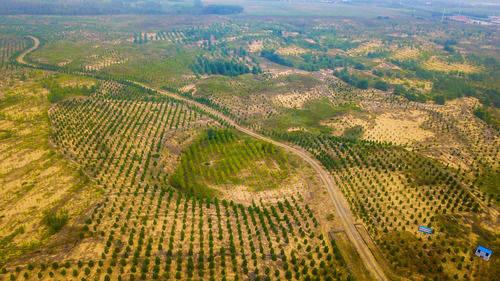 内蒙古科尔沁沙地生态环境持续向好发展