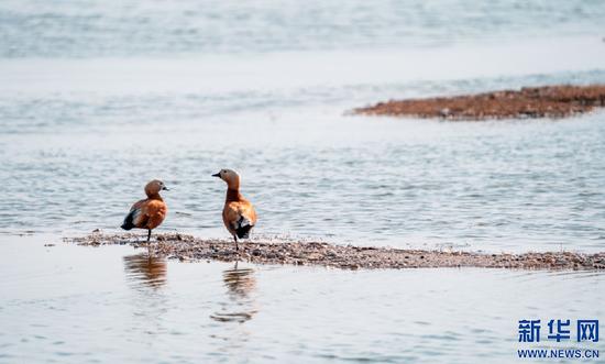 两只候鸟在海流水库岸边歇脚