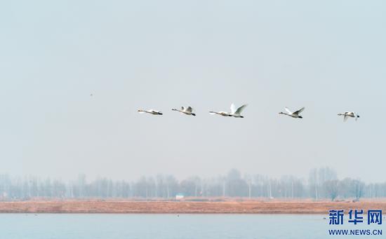 几只候鸟排成一行从天空飞过