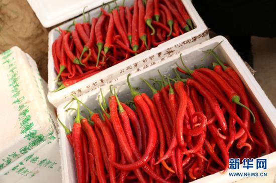 龙椒在市场上很受欢迎。(新华网曹桢摄)