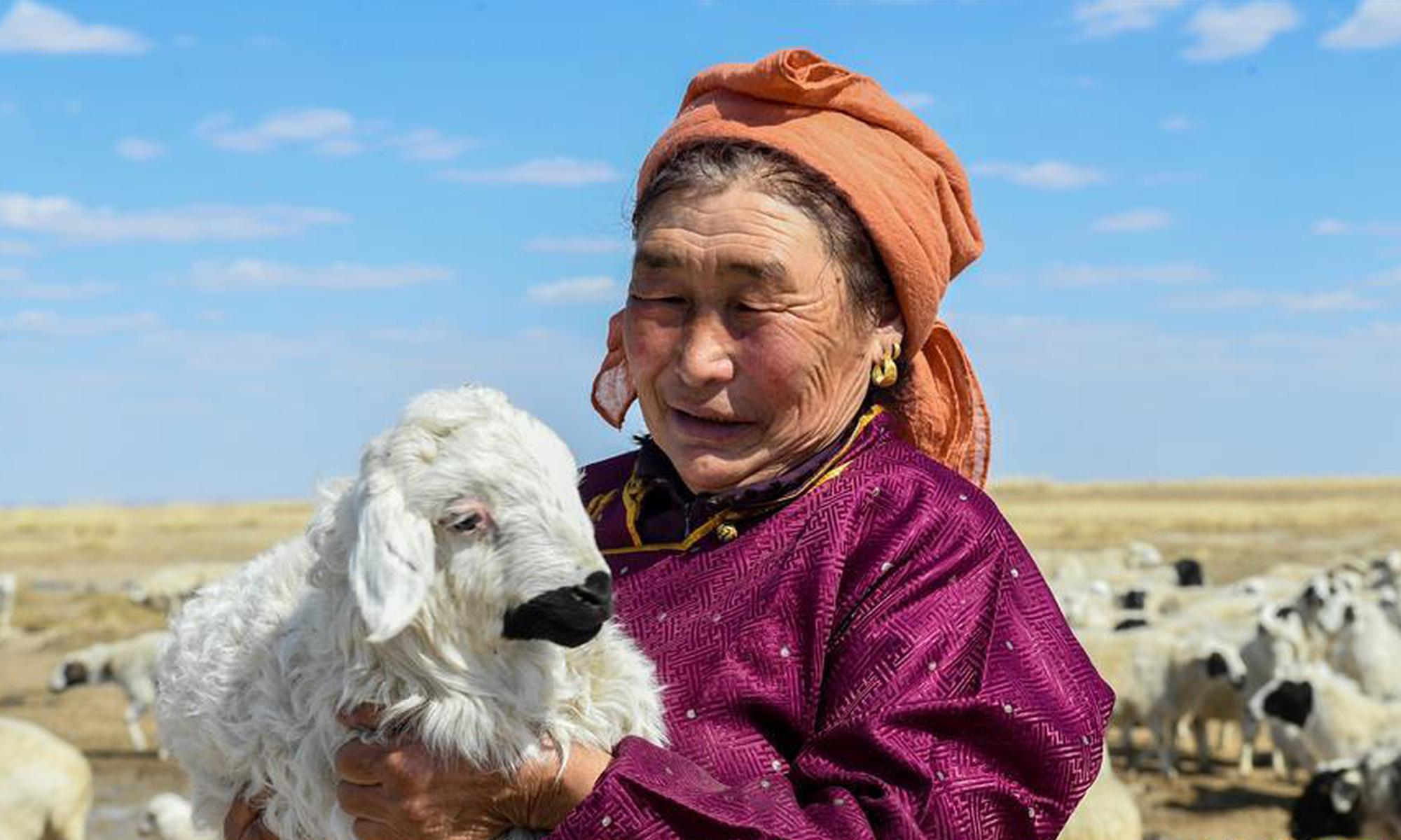 呼伦贝尔:牧民喜接春羔