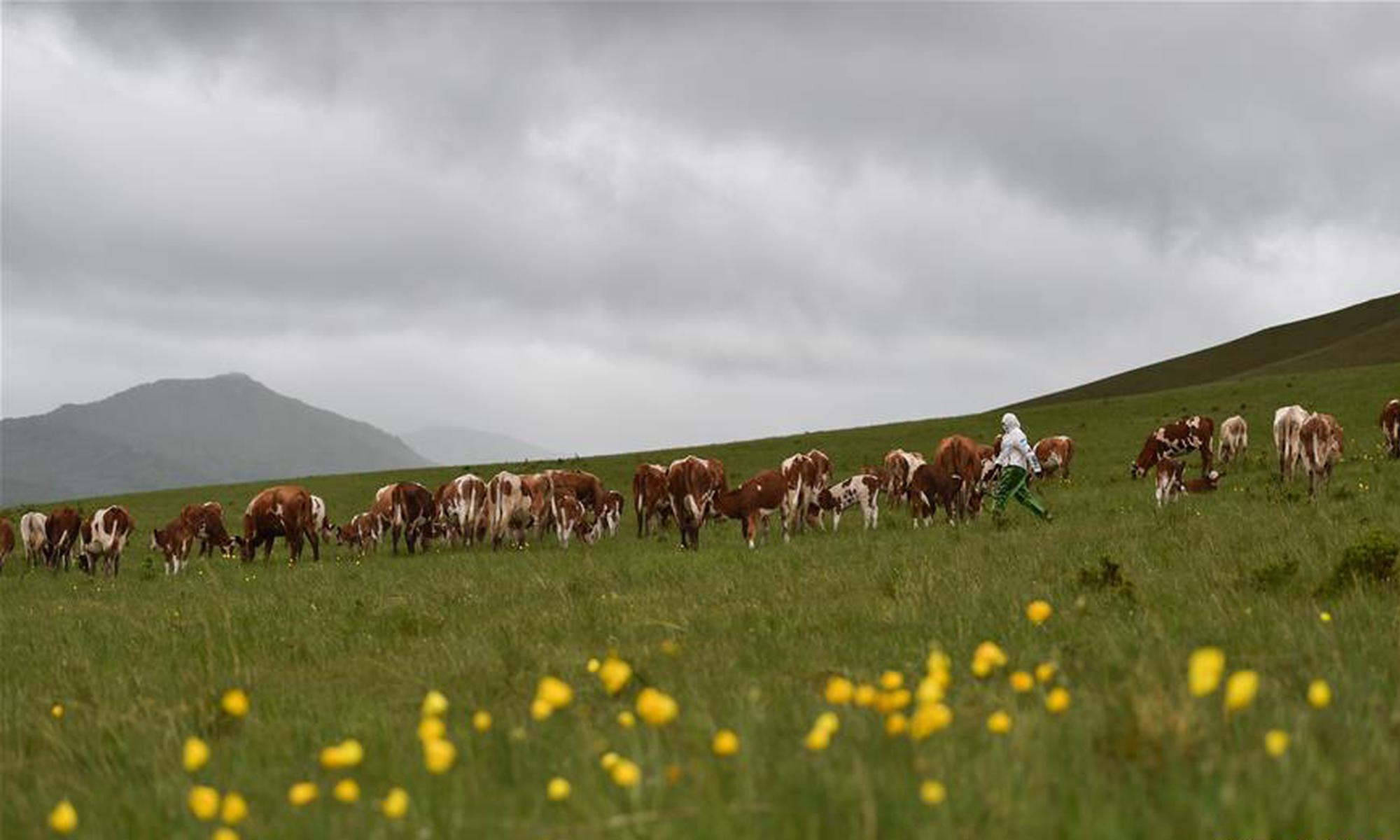 草原上的游牧迁徙