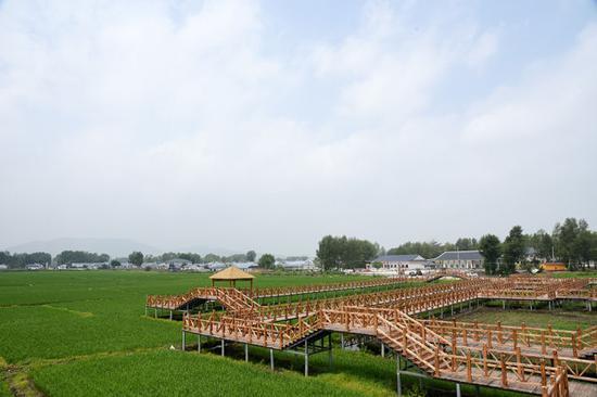 水稻种植景观正在成为三合村观光农业的重要组成部分。