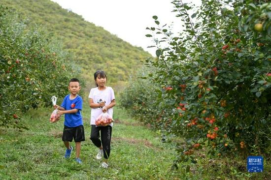 9月4日,兩名兒童在內蒙古興安盟突泉縣學田鄉采摘沙果?!?貝赫 攝