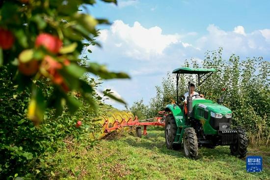9月4日,在內蒙古興安盟突泉縣學田鄉,農民駕駛農業機械割雜草。賀書琛 攝