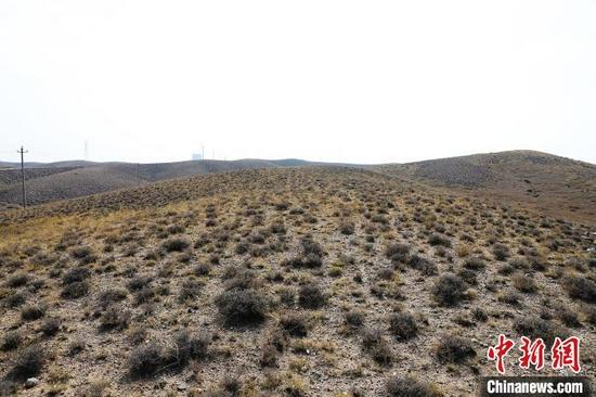 圖為西鄂爾多斯國家級自然保護區的半日花?!埩只?攝