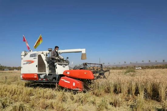 农机收割作业