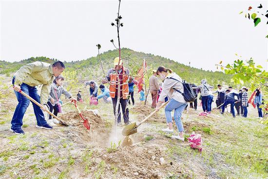 5月5日上午,内蒙古晨报社员工参加义务植树活动。