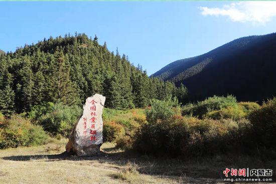圖為獲評全國林業英雄林。