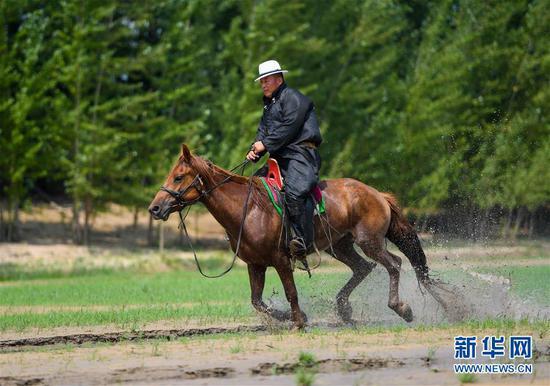 """呼日查毕力格骑马在河中奔跑(7月21日摄)。 今年35岁的呼日查毕力格是内蒙古赤峰市巴林左旗查干哈达苏木的牧民。从小喜欢蒙古马的他经过20年的努力,使自家的马群不断壮大,从最初的1匹发展到如今的100多匹。现阶段呼日查毕力格把主要精力放在了培养优秀的蒙古赛马上,这样既可以有较高的收入,又能够让蒙古马得到更多人的认可。 2018年3月,呼日查毕力格在自己的家乡查干哈达苏木创建了""""黑骏马旅游度假营""""。在他的度假营中,游客可以亲身参与到挤马奶、骑马、打马印、剪马鬃等丰富多彩的马文化体验项目中,深入了解蒙古马独特的生活习性和特点。 新华社记者 彭源 摄"""