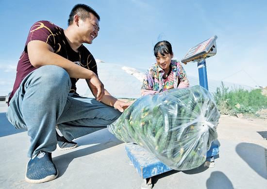 上门收购黄瓜 摄影/内蒙古日报社融媒体记者 孟和朝鲁