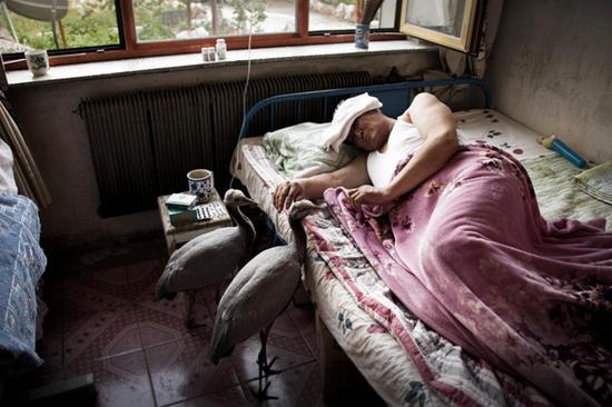 舍楞老人卧病在床,小鹤像儿女一样守在床前,期盼老人早日康复……