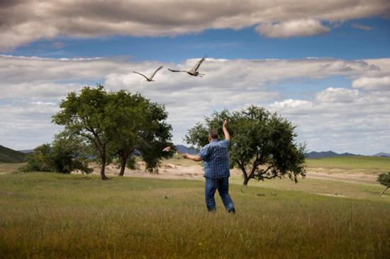 秋风吹响了飞向远方的集结号,舍楞老人的两只小鹤在空中盘旋,它们嘎嘎地叫着,在最后一声长长的鸣叫后,揣起对草原和老人的留恋飞入长空,去追赶鹤群……