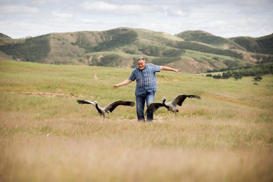 小鹤长到3个月大,翎羽已渐渐丰满,舍楞老人开始教小鹤起飞了,他像鹤妈妈一样张开双臂,不断地上下挥舞,老人与小鹤一起练习飞翔。
