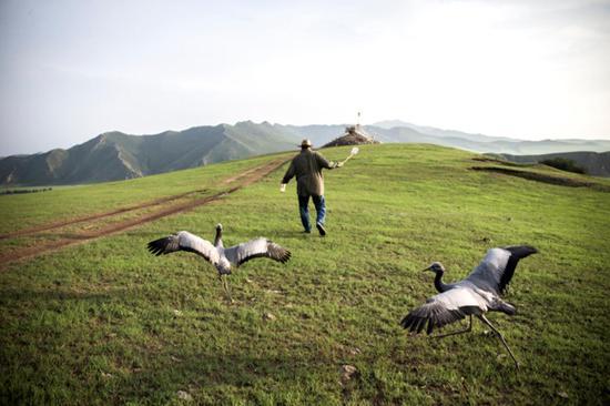 秋天一点点临近,舍楞老人几乎一整天都和小鹤呆在山坡上,他有意让小鹤记住:有敖包的地方就是家。