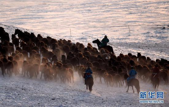 几名套马手在驱赶马群