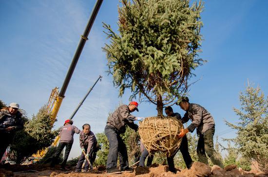 工作人员正在栽种树木