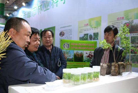 农牧民对经济林育苗技术十分感兴趣