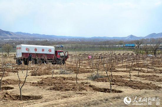 大青山前坡现已开挖种植穴97.47万个