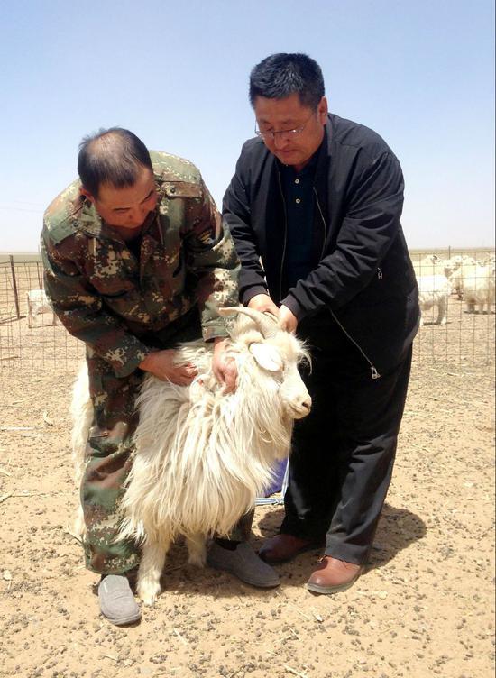 吉日木图(左)给自家的白绒山羊做疫病检查