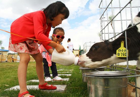 孩子们一起给牛宝宝喂奶