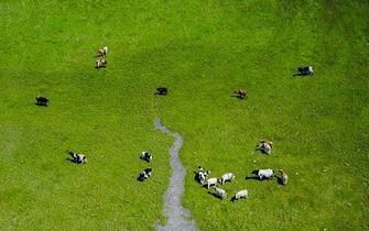 呼伦贝尔大草原夏日即景