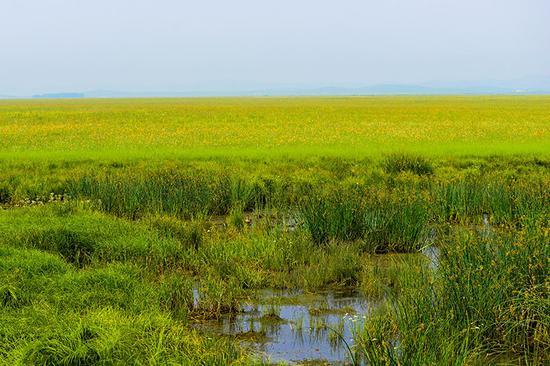 雨后的金莲川草原