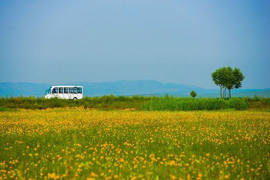 美丽的金莲川草原一景