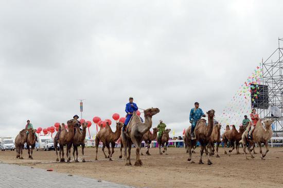 格外亮眼的骆驼方队