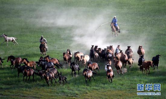 牧民在锡林浩特市宝力根苏木的草原上套马(2015年7月21日摄)。