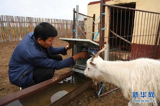 7月28日,内蒙古自治区鄂尔多斯市鄂托克旗阿尔巴斯苏木呼和陶乐盖嘎查牧民巴图格什格在查看牛羊自动饮水装置。