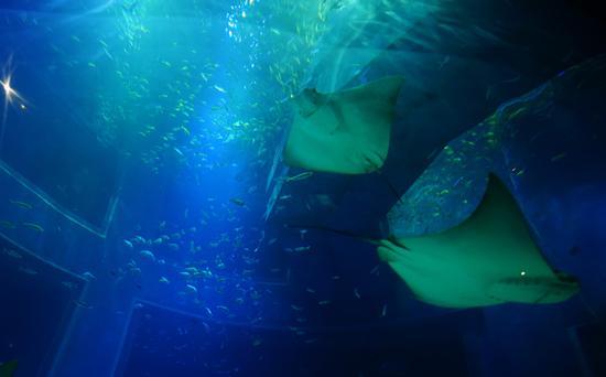 海洋馆内各种各样的鱼类。