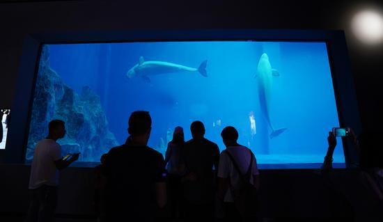 白鲸表演人气高。