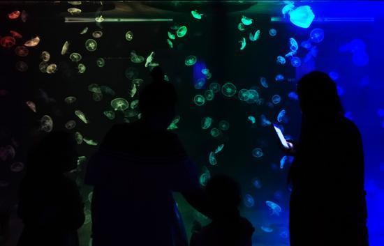 游客带着孩子观看水母。