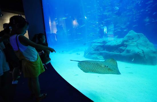 小朋友对水族箱内的鱼很感兴趣。