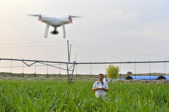 傍晚时分,鄂尔多斯市乌审旗南部草原牧民苏雅拉达来在自家的牧场上,操控一台纯白色无人机疾驰飞行,用无人机查看牛群分布情况。 金泉 摄