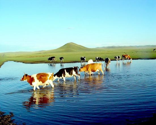 三、内蒙古有我国最大的草原