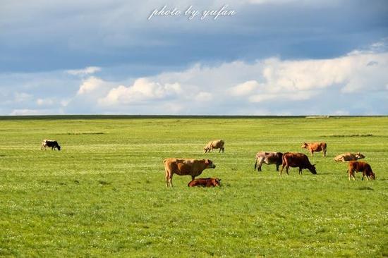 草原上非主干道车辆一般都很少,如果遇上好的美景,则可以靠边停车,好好拍上几张