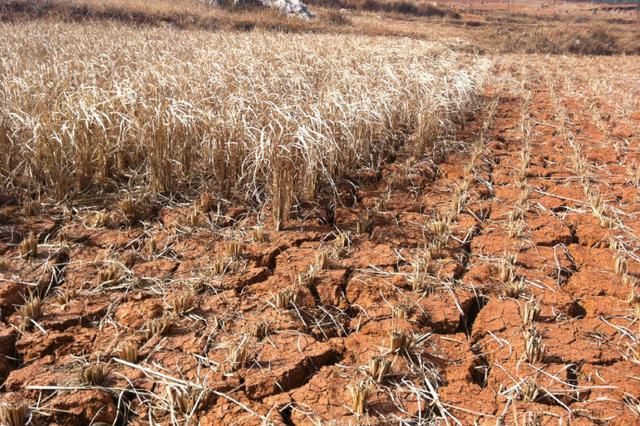 内蒙古自治区干旱发生面积达74.3万平方公里