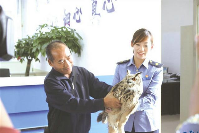 国家二级保护动物雕鸮在赤峰火车站获救