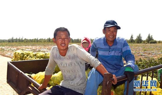 这是内蒙古杭锦旗农民在收获库布其沙漠中种植的西瓜。(新华社记者邓华摄)