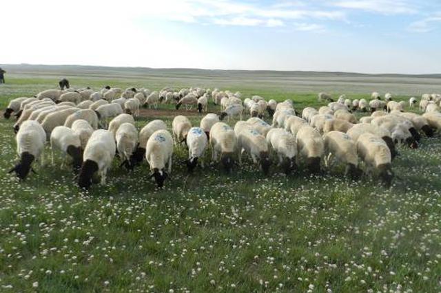 乌兰察布市农牧业产业销售收入迅猛增长