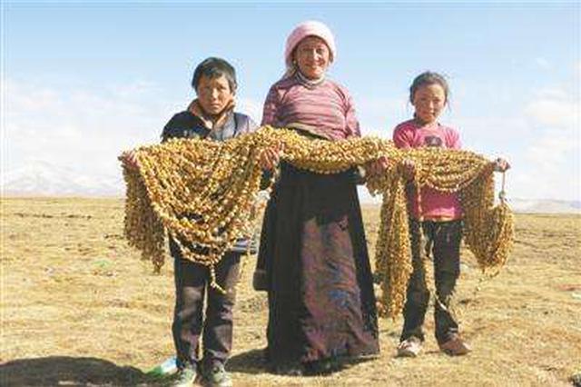 巴彦淖尔市为13万农牧民转移就业牵线搭桥