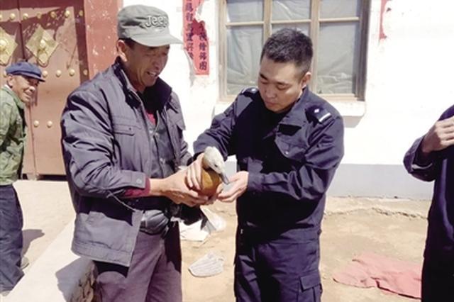 村民捡到受伤赤麻鸭是国家三有保护动物
