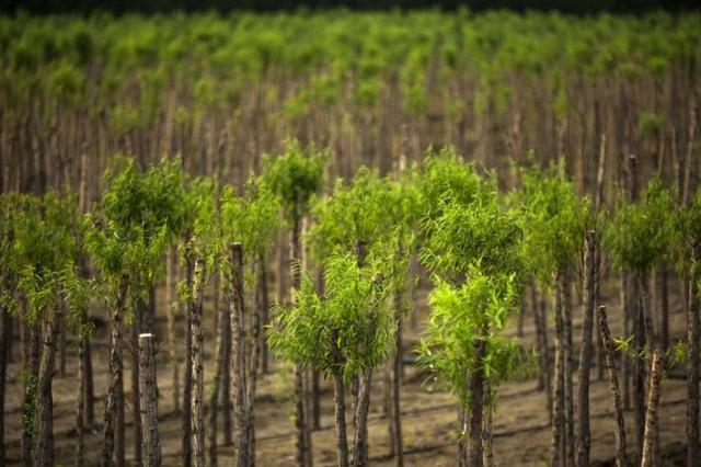 兴安盟义务植树造林添新绿4.5万亩