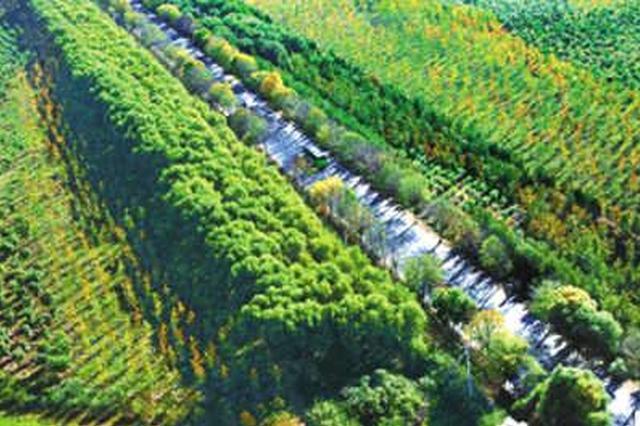 通辽市:2013年至2017年人工造林又添360万亩新绿