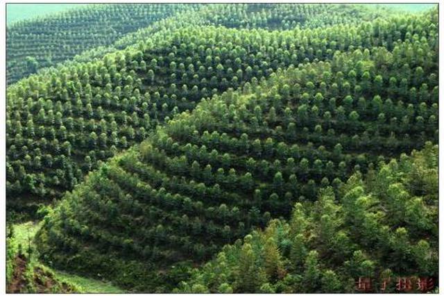 阿拉善盟今年要完成人工造林144万亩