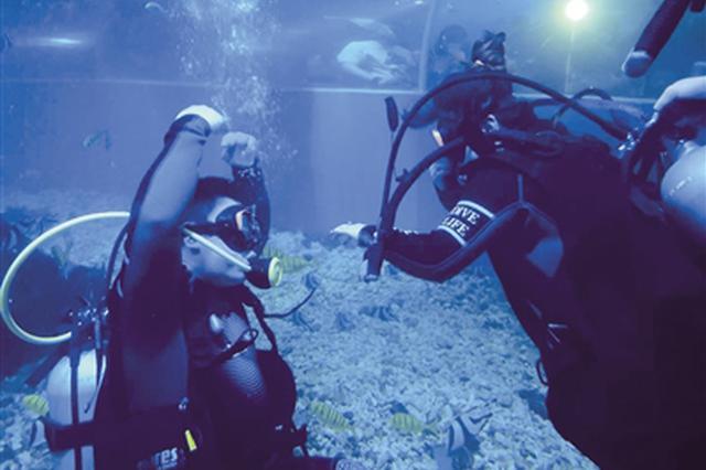 海龟鲨鱼见证 潜水求婚很浪漫