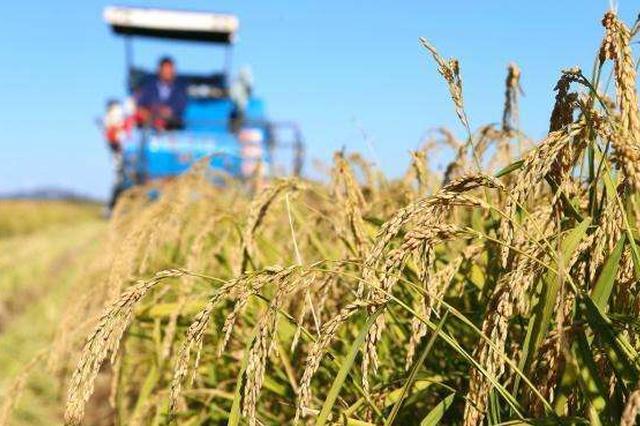 内蒙古首次:包头试种海水稻改良盐碱地