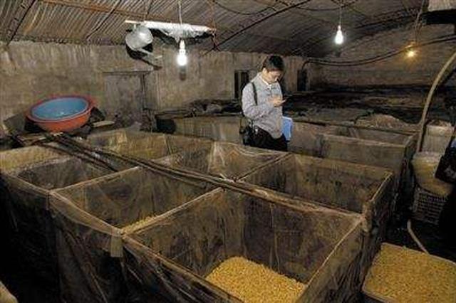 日销几千斤 包头市两家豆芽黑作坊被查封